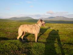 Early Morning with Karhu, Ben y Ghlo Beyond (andywalker1) Tags: andrewwalker karhu wolfhound