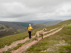 Walking Down From Carn Bhac (andywalker1) Tags: andrewwalker karhu wolfhound