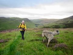 Climbing Carn Chalamain, Above Glen Tilt (andywalker1) Tags: andrewwalker karhu wolfhound glentilt carnchalamain