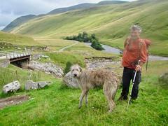 With Karhu in Glen Tilt (andywalker1) Tags: andrewwalker glentilt karhu wolfhound