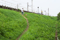 oi#26 (tetsuo5) Tags: 足柄上郡 大井町 ashigarakamigun oimachi pentax pentaxqs1 smcp515mmf2845