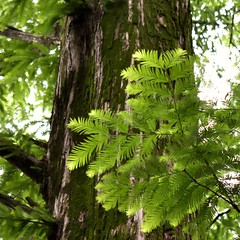 Fresh green (Abhay Parvate) Tags: leaves green nature pattern abstract