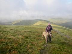 On Glas Tulachain (andywalker1) Tags: andrewwalker karhu wolfhound