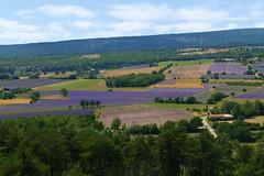 P1140997 (alainazer2) Tags: aurel vaucluse provence france ciel cielo sky champs fields fiori fleurs flowers lavande lavanda lavender
