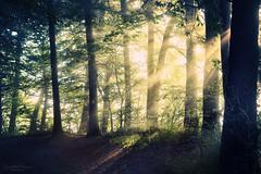 Number five (Rita Eberle-Wessner) Tags: wald forest woods baum bäume tree trees laubwald laubbäume waldweg forestpath sonnenstrahlen sunrays sunbeams nebel tagesanbruch numberfive