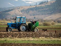 Potato planting - April 2019 (Paul.White) Tags: potatoplanting ozsdola romania farming agriculture