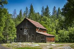 Murphys, California: Rustic Barn (rocinante11) Tags: murphys california unitedstates barn rustic old wood trees goldcountry