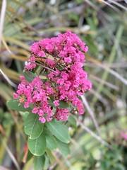 Pink Magic Flowers Floating In Air 3D - IMRAN™ (ImranAnwar) Tags: iphone imran bokeh blooming plants nature green pink flowers apollobeach tampabay florida