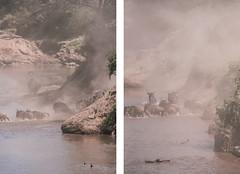 River crossing (knipslog.de) Tags: masaii masaimara kenia kenya africa afrika wildlife animals wildetiere marariver river crossing migration wildebeest