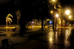 ...and the rain was falling... (Fnikos) Tags: sea mar mare shore coast seashore beach water waterfront street road tree palmtree bench wind windy rain dark darkness light lights shadow shadows sky cielo color colour colores colours colors evening night nightview nightshot badalona outside outdoor
