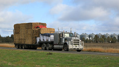 Jerilderie Hay (2 of 3) (Jungle Jack Movements (ferroequinologist) all righ) Tags: jerilderie north stock feed stockfeed hay straw kennny kw kenworth radcliffe rural kerang farm farmer ranch w850 k100 nsw new south wales australia australian t604 hp horsepower big rig haul haulage freight cabover trucker drive transport carry lorry hgv wagon road highway nose semi trailer deliver cargo interstate vehicle load freighter ship motor engine power teamster truck tractor prime mover diesel injected driver cab loud wheel double b grunt dry drought cattle sheep