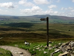 Pen-y-Ghent Signpost (fraktalisman) Tags: yorkshire yorkshiredales dales britain england europe travel summer 2019 green mountains fell nature countryside