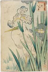 Nakayama Sugakudou (fl. c.1850-1860) - Irysy i czapla (Padre Martini) Tags: nakayamasugakudou art drawings japan