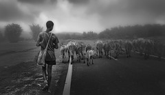 Returning home .. (tchakladerphotography) Tags: blackwhite bw person boy animal cattle road sky clouds atmosphere atmospheric travel trees rural