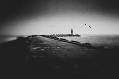 Pier van IJmuiden (alowlandr) Tags: ijmuiden lensbaby sol22 blackandwhite birds blur sea pier texture m43 olympus m10