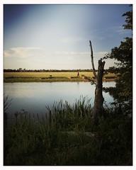 Dog walker (breakbeat) Tags: shadows silhouettes dogwalker branch tree river hipstamaticjaneblankoiphoneonlyanimalsflowerslandscapesnaturesunsettraveloxfordflickrmeetingaugust19oxfordphotographersportmeadowwolvercotejerichoriverwalksummerthamespathisis