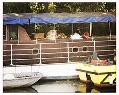Beware, tiger on board (breakbeat) Tags: boat stuffedtoy tiger burglardeterrent hipstamaticiphoneonlyblankojaneoxfordflickrmeetingaugust19oxfordphotographersportmeadowwolvercotejerichoriverwalksummerthamespathisis