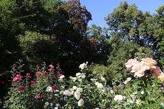 Warsaw University Botanical Garden, Poland (LeszekZadlo) Tags: botanical garden flowers landscape landschaft paisaje pejzaż green blue nature natureza naturaleza kwiaty flora polska poland polonia pologne polen warszawa warsaw varsovie warschau mazowsze mazovia europe eu ue
