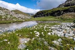 Wollgras (sMäc) Tags: wandern hiking valsertal berge zervreilahorn mountains zervreila vals alpen