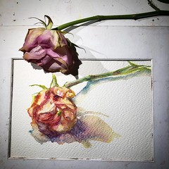 Day 1469. The #rose #painting for today. #watercolour #watercolourakolamble #sketching #stilllife #flower #art #fabrianoartistico #hotpress #paper #dailyproject (akolamble) Tags: rose painting watercolour stilllife flower art paper sketching hotpress dailyproject fabrianoartistico watercolourakolamble