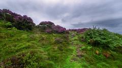 Waun-y-Llyn Country Park (joanjbberry) Tags: waunyllyncountrypark northwales park wales landscape heather mountain fujifilmxt3 fujifilm xt3