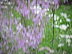 Hommage to Gustav Klimt (ebergcanada) Tags: abstract flower icm painterly intentionalcameramovement