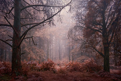 Wonderland II (www.neilburnell.com) Tags: wonderland woodland surreal mystical infrared colourswap landscape forest trees mood colour