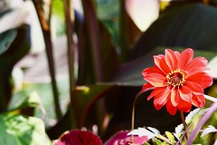 Art of natur (i_kaya@rogers.com) Tags: flower art natur photo photograph photography toronto ontario canada park highpark