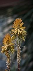 Sans titre (AlainC3) Tags: fleurs flowers nikond7500 dof orange