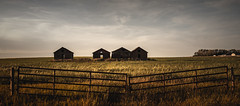 4 old brothers (Derek.R.G) Tags: farming farms landscape structures canon eos m50 alberta canada lightroom adobe nature abandoned
