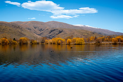 Beautiful Autumn coloured trees at Wairepo Arm, Lake Ruataniwha, (stewart.watsonnz) Tags: creativeandscenery lake newzealand ohau rural autumn birds cloud colour countrside countryside hills mountains reflections slopes southisland southernalps swans trees water twizel