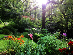 Bathed in the Light of Grace (77ahavah77) Tags: light illumination trees forest mountains flowers plants outside sunshine sun grace