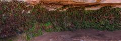 Vine Wall on a Trail in Page, Arizona (danmcgrotty) Tags: green vines red rocks hike hiking canon t6 arizona page path walk road trip drive