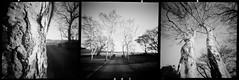 Driveway Tryptic (Matt Jones (Krasang)) Tags: ondupinhole onducamera kosmo mono 100 xtol stock black white tryptic film pinhole 6x6 tasmania driveway