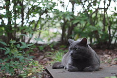Gray Cat (Flexible Negativity) Tags: 猫 cat 貓 meow ねこ caturday nuko pentax k70 kitty kitten graycat