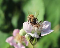 Photo of Bee-autiful!