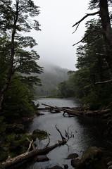 Huerquehue V - Divergencia (gonvv) Tags: huerquehue chile parque nacional sendero lagos