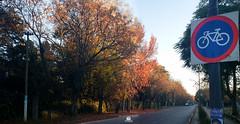 panoramica del parque 29 - Diaz De Vivar Gustavo (Diaz De Vivar Gustavo) Tags: ranelagh parque eva hajduk invierno amanecer diaz de vivar gustavo fotos desphotos photos
