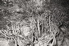In the Vikos Gorge, Greece (Miche & Jon Rousell) Tags: blackandwhite mountains greece gorge vikosgorge zagori astraka timfi mikropapigo vikos pindos pindosmountains