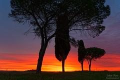 Tuscany Sunrise (Johan Konz) Tags: sunrise tree clouded sky outdoor landscape torrenieri tuscany italy nikon 7500 dusk colourful