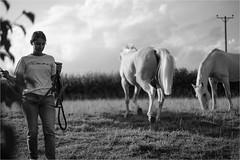 Release (Fitzpaine) Tags: horse horses whitehorse blackandwhite monochrome equestrian staplefitzpaine somerset england westcountry field paddock farm countryside rural xt2 fujifilmxt2 davidjdalley uk