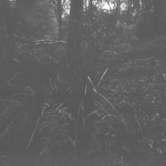 Photograph!! (Matthew Paul Argall) Tags: 120film 120 mediumformat squareformat squarephoto ilforddelta100 100isofilm blackandwhite blackandwhitefilm