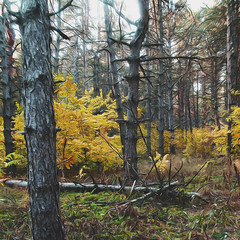 Etude #PA150132. (petrovichk) Tags: digitalphoto nature forest autumn trees rehabilitation yellow