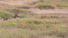 (Markus Hill) Tags: arusha tansania africa travel canon tanzania safari 2019