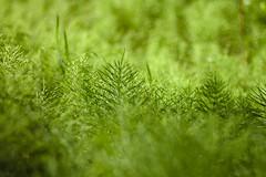 Green (timon.blub) Tags: quebec canada travel grass field green rural hayfield