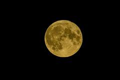 Pilnas / Full moon (Jonas Juodišius) Tags: verkiai verkiųparkas vilnius lietuva lithuania mėnulis moon luna