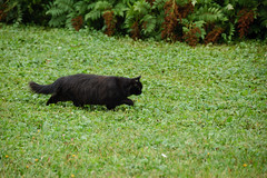 hd_20190817100415 (anatoly_l) Tags: russia siberia kemerovo city summer august year2019 black cat green eyes