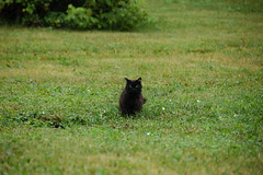 hd_20190817100356 (anatoly_l) Tags: russia siberia kemerovo city summer august year2019 black cat green eyes
