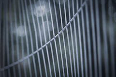 Behind The Lines - 68/100x (Explored) (eskayfoto) Tags: canon eos 700d t5i rebel canon700d canoneos700d rebelt5i canonrebelt5i abstract lightroom 100x 100xthe2019edition 100x2019 image68100 sk201908111295editlr sk201908111295 lines line fence abney park abneypark cheshire cheadle stockport barrier railing metal metallic