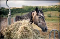 cheval (cyrille r) Tags: pro image 100 minolta xg2 rokkor 45f2